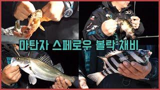 [마탄자TV] 홍도에서 야간 밤볼락 조황 대박!!! 홍…