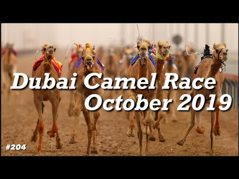 Dubai Camel Race 2019 October | Full Video | Dubai National Sports | Dubai Must See Do |  Attraction