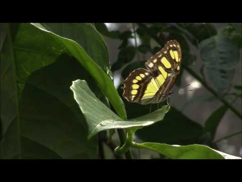 NatureVision TV presents our Costa Rica Program Preview