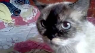 Что с глазами у этой кошки????