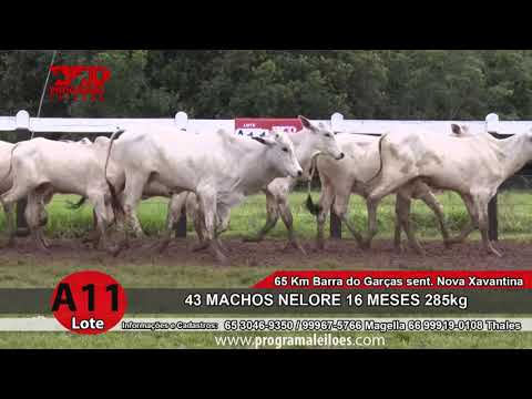 LOTE A11