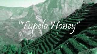 Tupelo Honey - Van Morrison