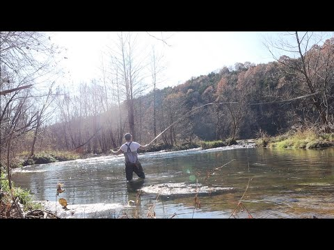 FLY FISHING MISSOURI CREEK FOR WILD TROUT (Ozark Streams Are Full Of Amazing Fish)