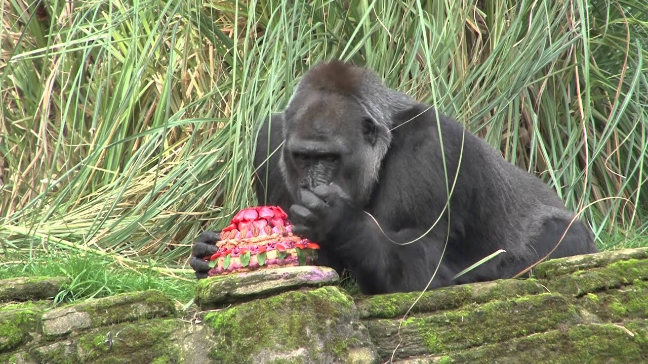Gorilla Birthday Cake