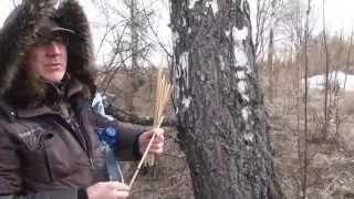 видео Дары природы: когда собирать березовый сок