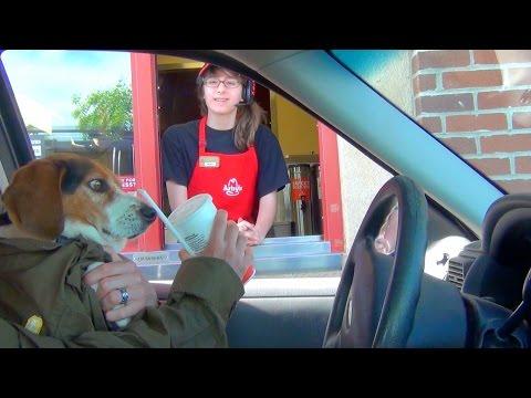 DOG IN THE DRIVE THRU!