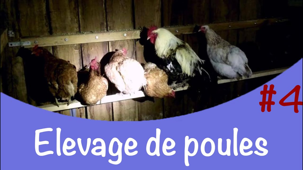 Elevage de poules 4 fabrication d 39 un perchoir youtube - Maison pour les poules ...