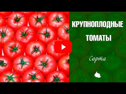 Крупноплодные томаты ✅ Выбираем лучшие сорта томатов