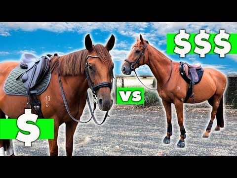 $10 SADDLE PAD VS $220 SADDLE PAD!