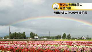 20180616大雄緑花園の定植作業