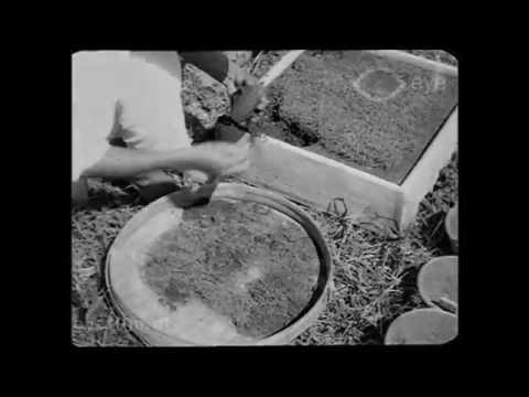 De Rietsuiker Cultuur op Java
