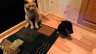 прикол такса Елисей и кот Леопольд
