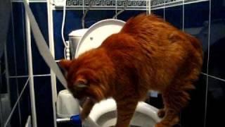 Умный кот ходит в туалет)))