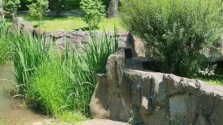 Сказочно-красивые  пейзажи! Водопад. Релакс для души. Красивая природа!