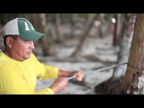 Hannibal Spearfishing Panama- On Vimeo