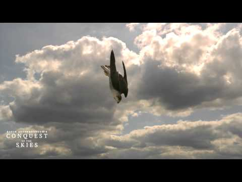 David Attenborough's Conquest Of The Skies 3D - New 3D Technologies
