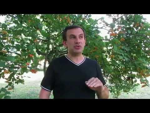 """Шепетівський """"курорт"""" & """"мінералка"""""""