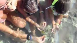 feeding fish on a coral reef dreams beach resort marsa alam egypt 08 2012