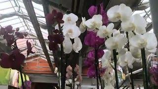 ОБИ конец марта 2018г. Садовый Рай. Цветы и цены. Орхидеи.Саженцы.