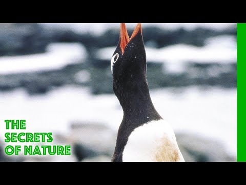 Wildest Antartica - The Secrets of Nature