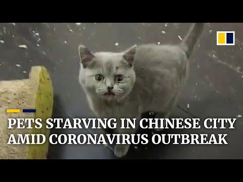 Pets Abandoned By People Fleeing The Coronavirus Outbreak In China