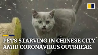 starving-pets-trapped-in-empty-homes-in-chinese-city-at-epicentre-of-coronavirus-outbreak