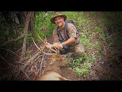 Hunting Rusa deer in the roar in New Caledonia part 28