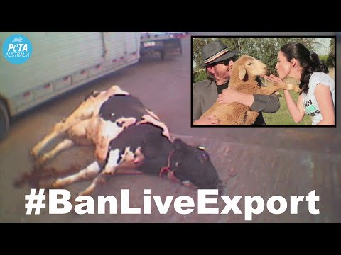 The Audreys Speak Out Against Live Export