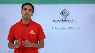 Eukaryotes - Plastids