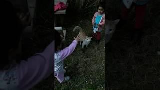 Kedinin çocuklarla oyunu