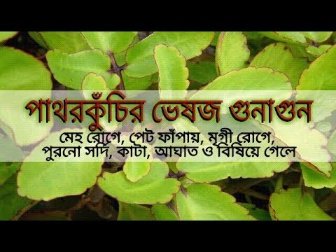 Herbal Quality of Kalanchoe pinnata (Episode-15)