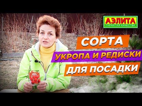 Сорта Укропа и Редиса для Посадки