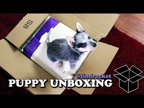 Puppy Unboxing #2 - Food