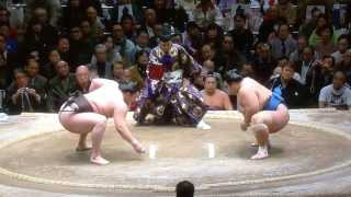 Mongolian Sumo Hero Hakuho Highlight Mix (Jan 2014)