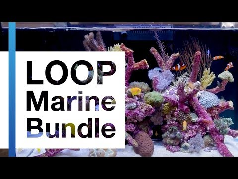 Meet the LOOP Marine Bundle by Current-USA