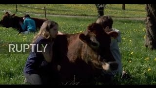 Switzerland  Hug a cow and forget about your worries and your strife