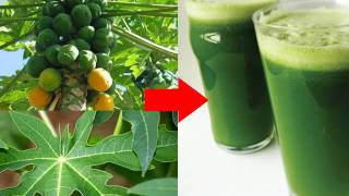Papaya Leaves Juice Can Cure Health Problems!