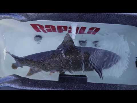Lake Ontario Trout Fishing Action: Rods Firing