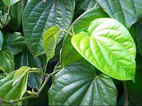 cara-mengatasi-jerawat---pengobatan-alternatif---tanaman-obat-tradisional-[hd]