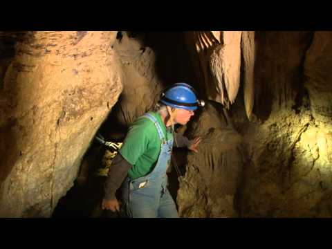 Shadows and Spiders: A Secret Cave in California - KQED QUEST Science on the SPOT