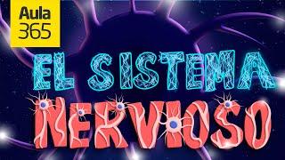 EL SISTEMA NERVIOSO | Videos Educativos para Niños