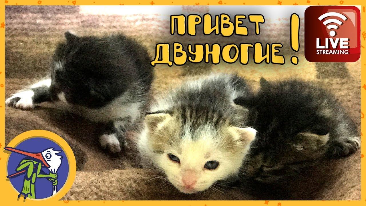 Трансляция из обители милоты и няшности. Кошка Китти с ...