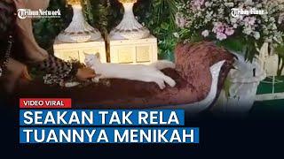 Seakan Tak Rela Tuannya Menikah, Kucing Ini Ikut Duduk di Pelaminan