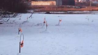 БЕСКОНЕЧНЫЙ КЛЕВ ЩУКИ НА ЖЕРЛИЦУ (ФЛАЖКИ)!!!!! р. Волга