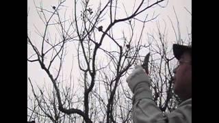 柿の剪定方法