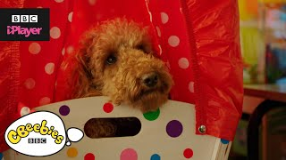 Waffle the Wonder Dog Top 5 | Starting School | CBeebies