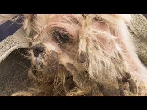 Arizona Humane Society Hoarding Rescue