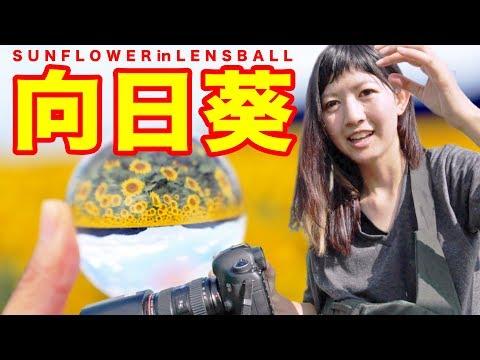【写真撮影】レンズボールを使ってCanon EOS5D MarkIIIでひまわりを撮ってたらインスタ映えどころかブチキレだしたwww【ともよ。】 thumbnail