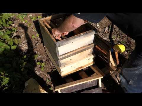 Wesensgemäße Bienenhaltung Schwarm Naturbau ohne Anfangstreifen