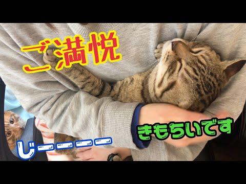 メス主に抱っこされゴロゴロいう猫と嫉妬する猫!
